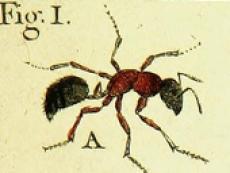 Gestionnaire de rencontres de fourmis